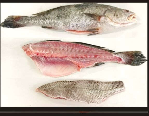 Grouper Fish Fillet