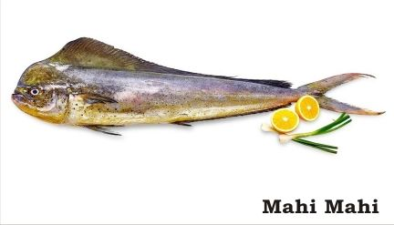 Fresh Mahi Mahi Fish