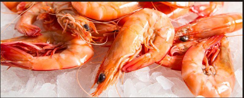 Frozen Brown Shrimps