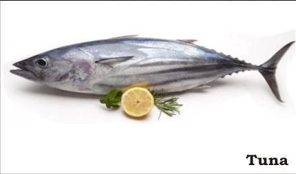 Fresh Tuna Fish