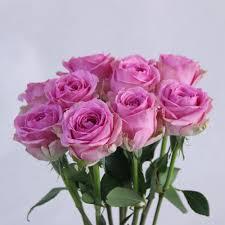Wham Rose Flower