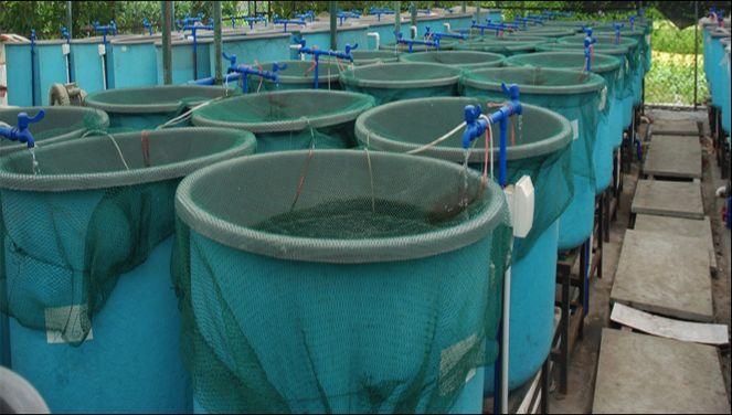 Aquaculture Shade Net 01