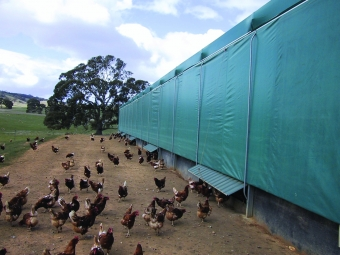 Poultry Shade Net 02