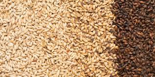 Malted Barley Grain