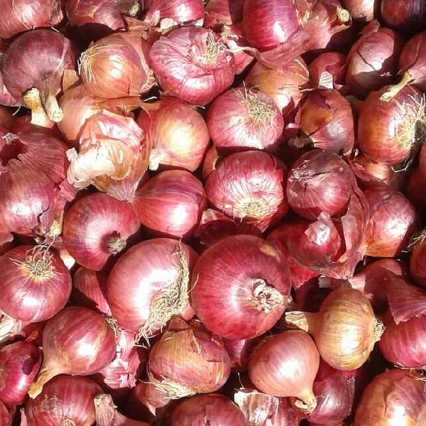 Fresh Red Onion Exporter,Fresh Red Onion Export Company in