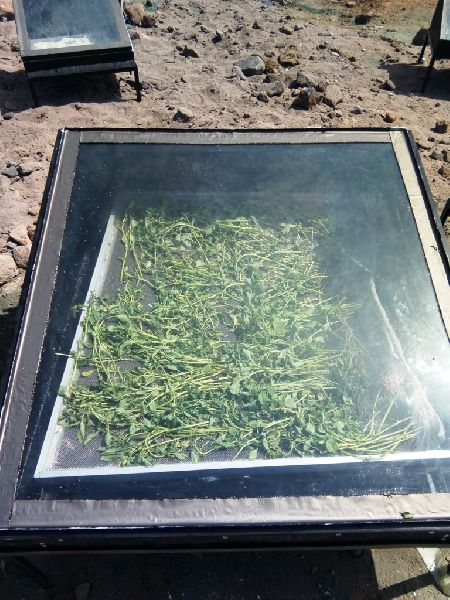 Solar Herb Dryer 02