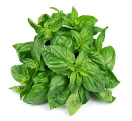 Pure Basil Oil