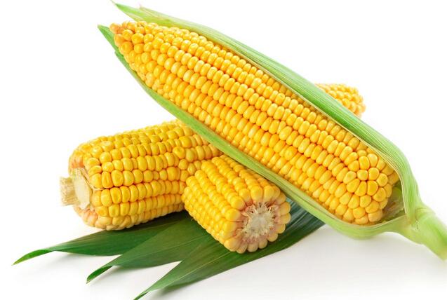 Maize Semolina 03