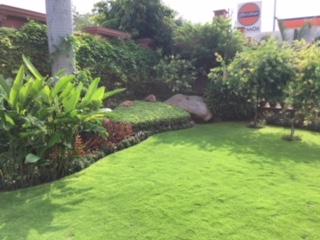 Landscape Development Service 13