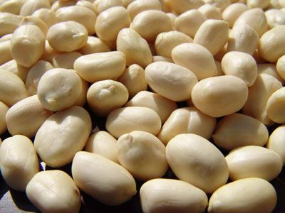 (Blanched )Peanuts 03