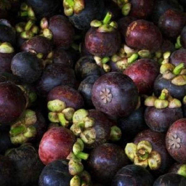 Fresh Purple Mangosteen