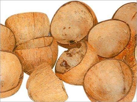 Coconut Shells 02