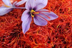 Saffron Threads 01