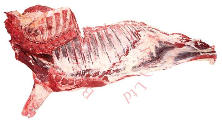 Frozen Beef Forequarter