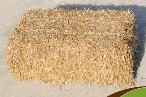 wheat long straw
