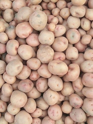 Kufri Red Potato