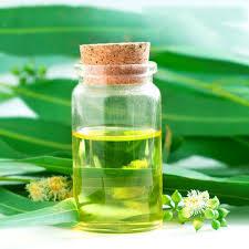 Eucalyptus Oil 02