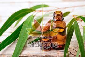 Eucalyptus Oil 01