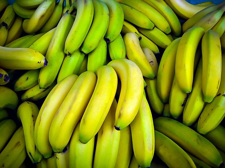 Cavendish Banana