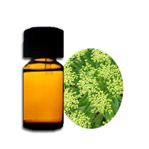 Angelica Absolute Oil