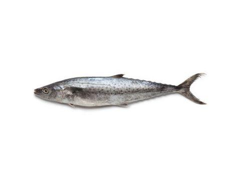 Surmai King Fish