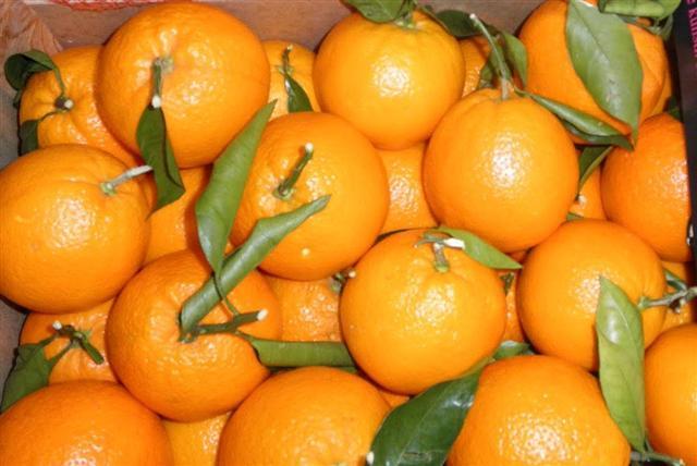 Fresh Mandarins Orange
