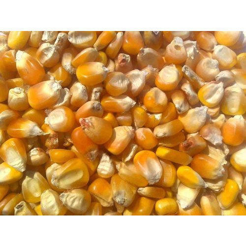 Natural Maize Cattle Feed