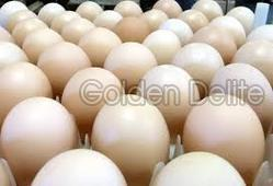 Organic Poultry Eggs