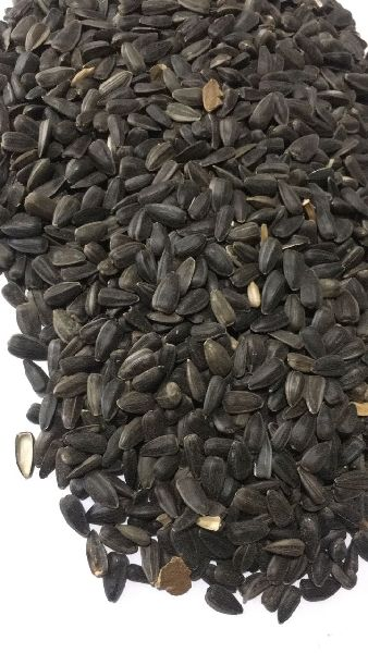 Sunflower Seeds 02