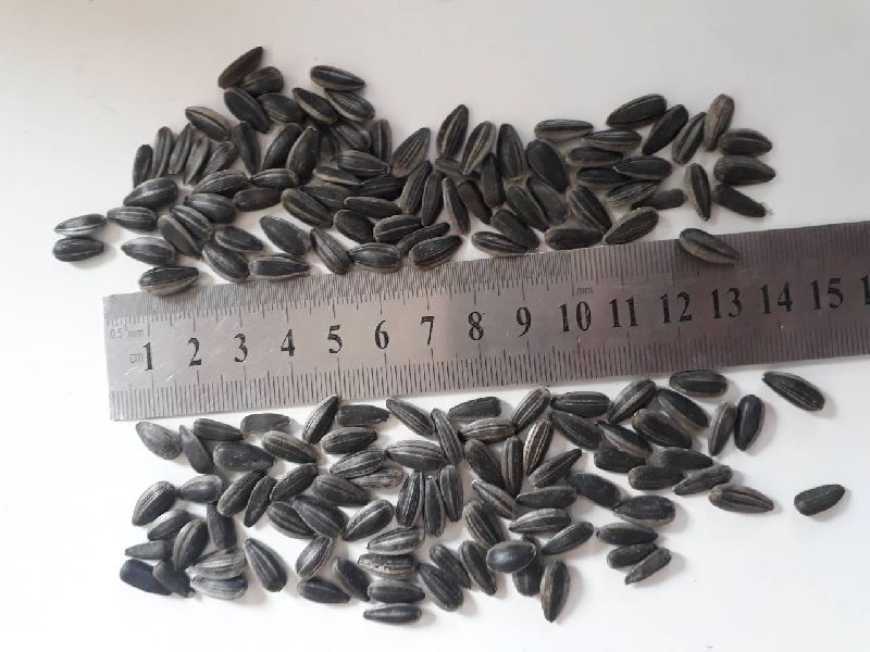 Sunflower Seeds 10
