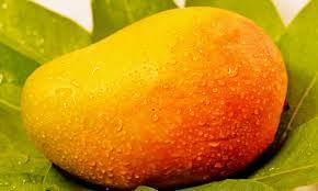 Indian Fresh Raw Kesar Mango