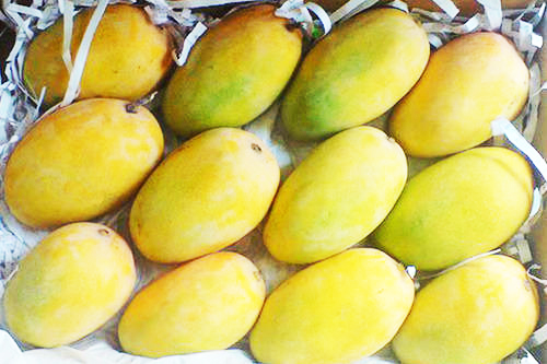 Pure Natural Kesar Mango