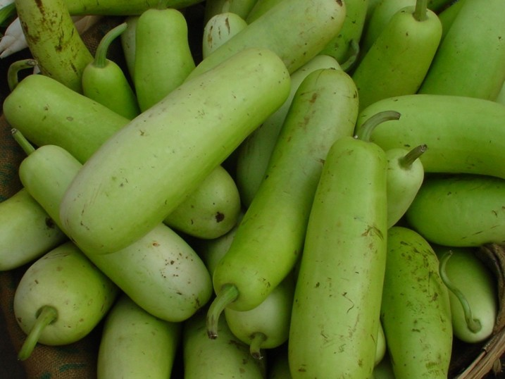 High Quality Bottle Gourd