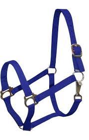 Blue Horse Nylon Halter