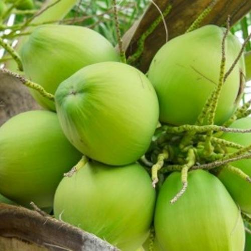 Organic Green Coconut