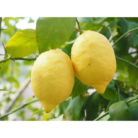 Natural Yellow Lemon