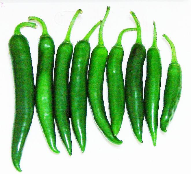 Organic Green Long Chilli