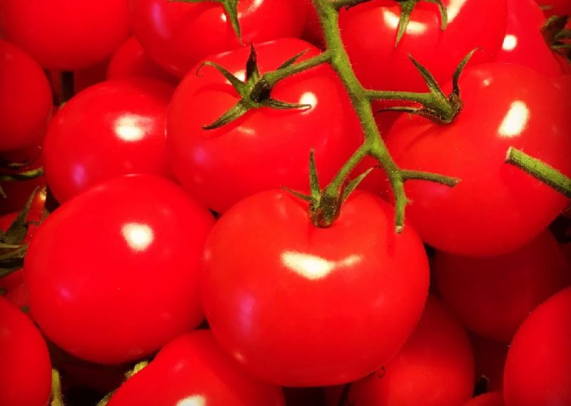 High Quality Tomato
