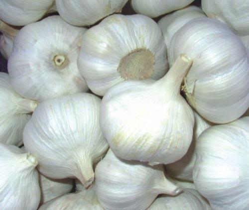 Garlic Pods
