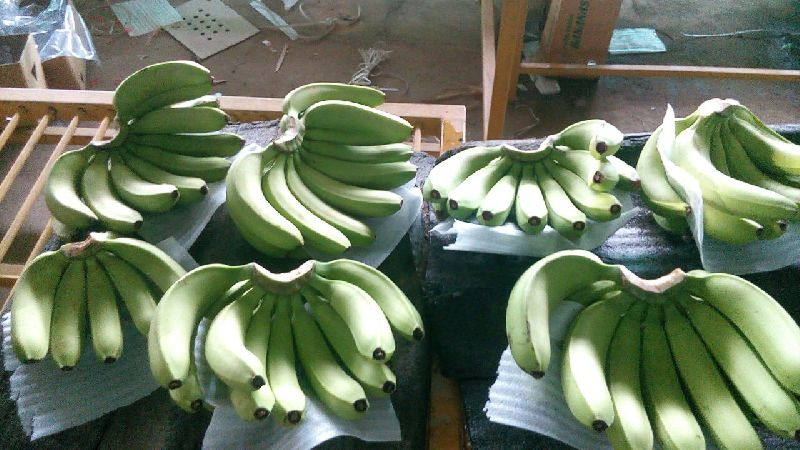 Cavendish Banana