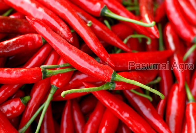 Fresh Chilli Pepper