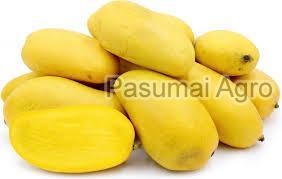 Fresh Yellow Mango