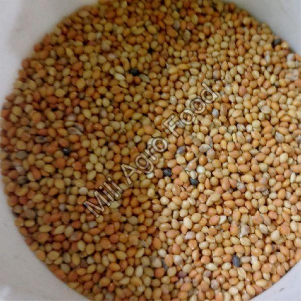 Kangni Seeds