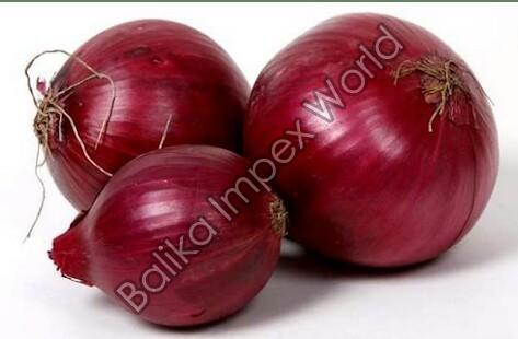 Fresh Big Red Onion