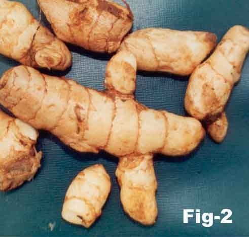Mango Ginger Root
