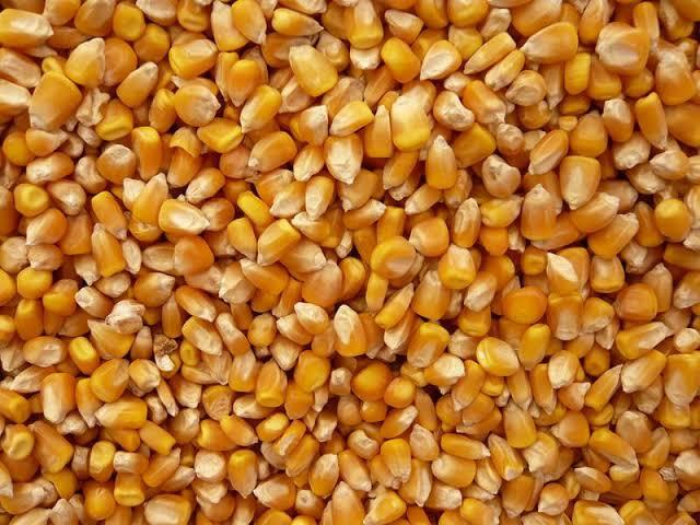 Animal Corn Feed