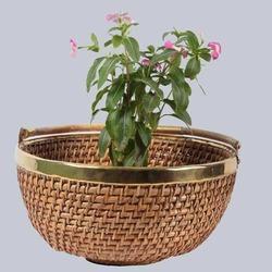 Cane Planter