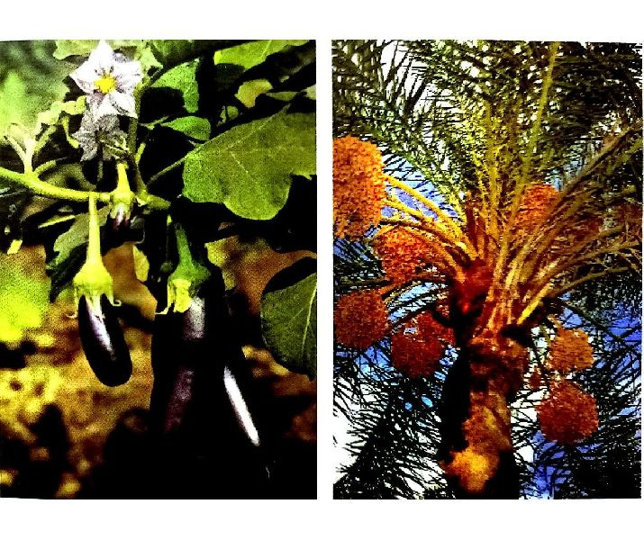 Liquid Plant Growth Stimulants