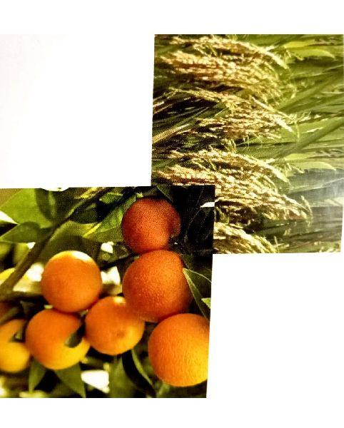 Nutrient Mobilizing Liquid Biofertilizers