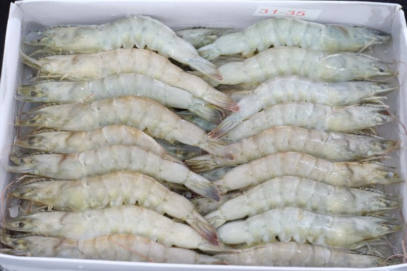 Frozen Whiteleg Shrimp